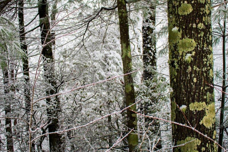 Lijn van bomen langs een het lopen weg na een verse sneeuwval royalty-vrije stock afbeelding