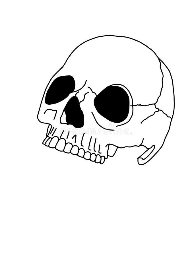 Lijn van de de illustratie kleurende tekening van de schedel de halve tekening royalty-vrije illustratie