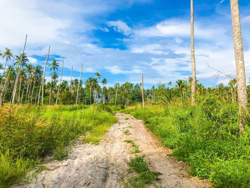Lijn van de kokosnoten de boskust met zandweg aan overzees strand stock afbeeldingen