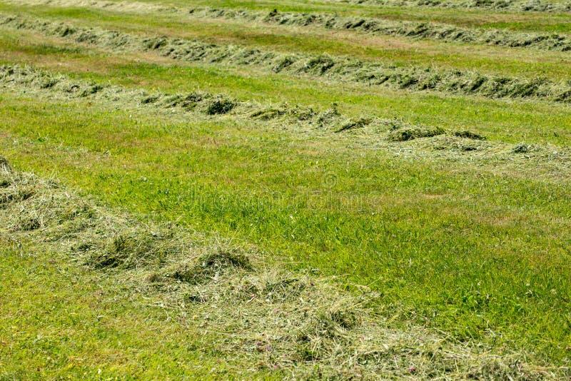 Lijn van het maaien van gras royalty-vrije stock fotografie
