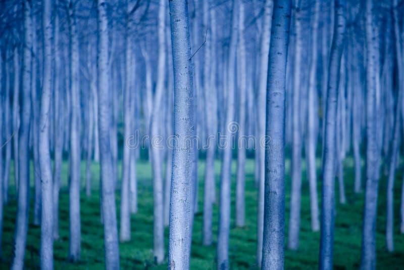 Lijnen van bomen royalty-vrije stock afbeeldingen