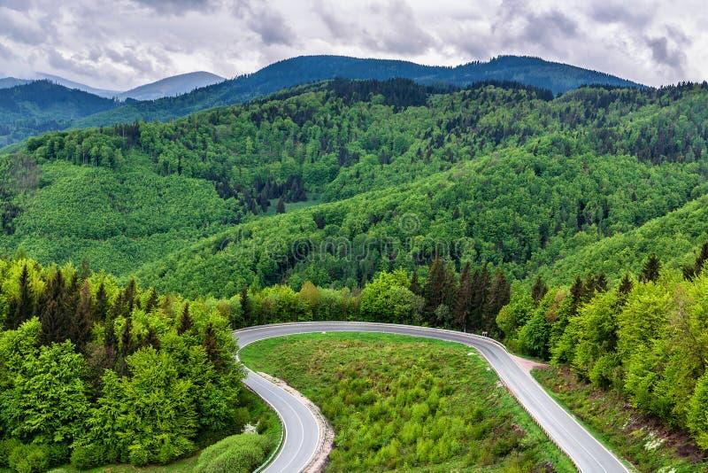Lijnweg in de lentebos stock afbeelding
