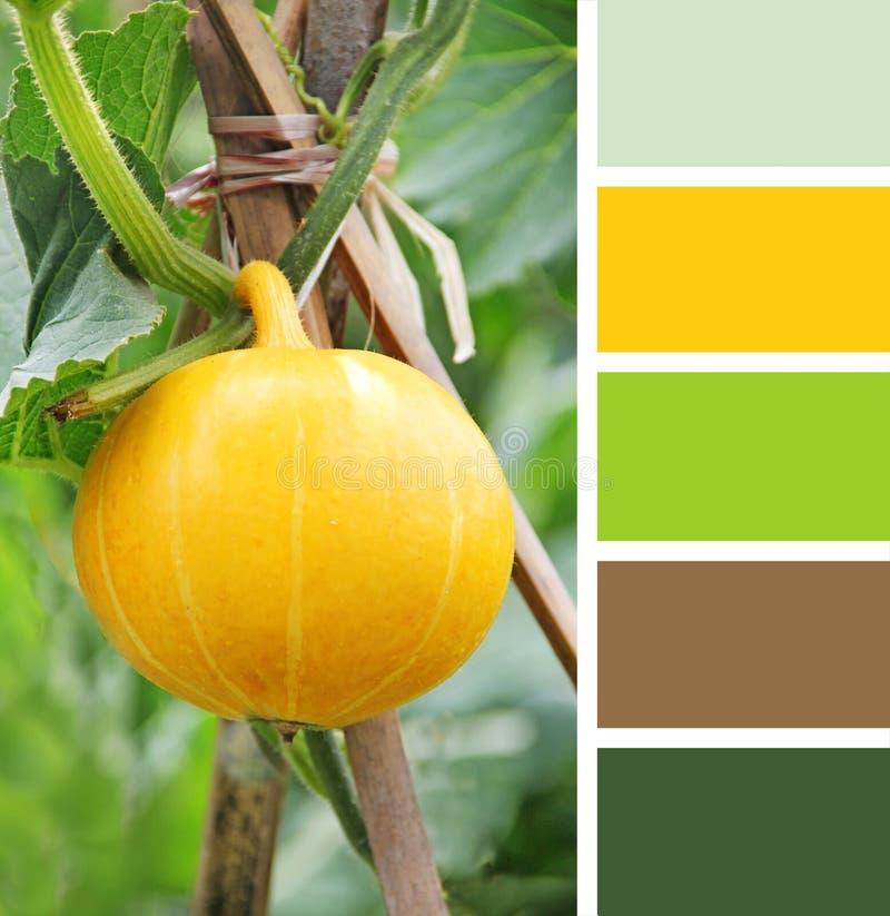 Lijst die in koffie plaatsen de monsters van het kleurenpalet pastelkleurtinten stock foto