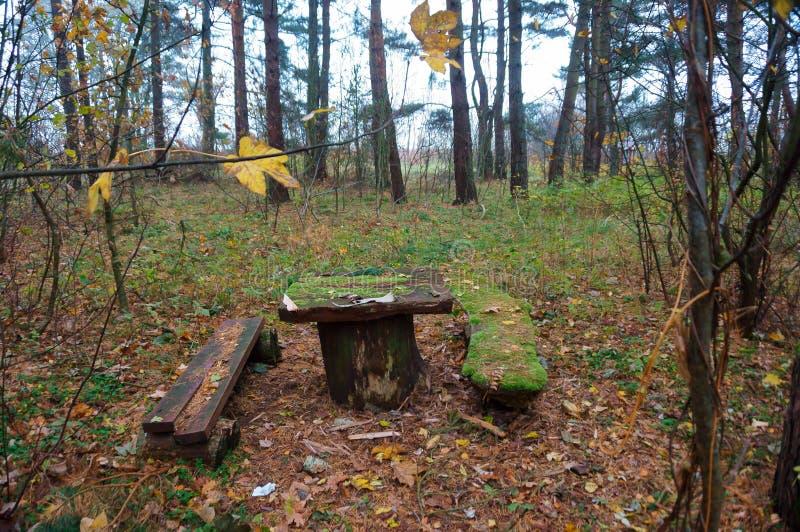 Lijst en bank in de bos, houten die bank met mos wordt behandeld royalty-vrije stock foto's
