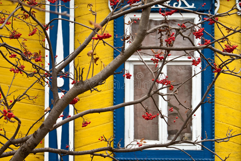 Lijsterbes en venster stock afbeeldingen
