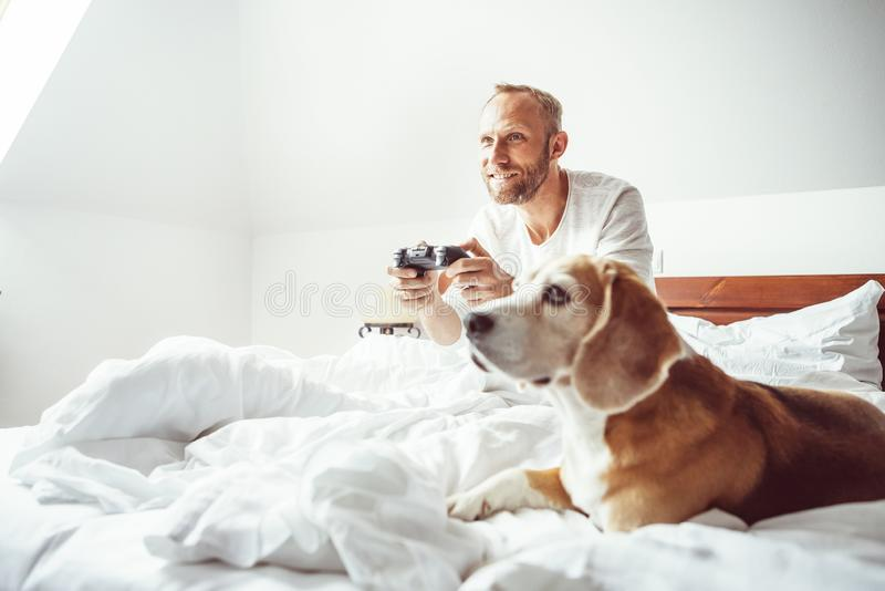 Like a child: udult breaded man waked up and plays PC games don`t stands up from bed.His beagle dog watching the game with very in. Terest stock photo