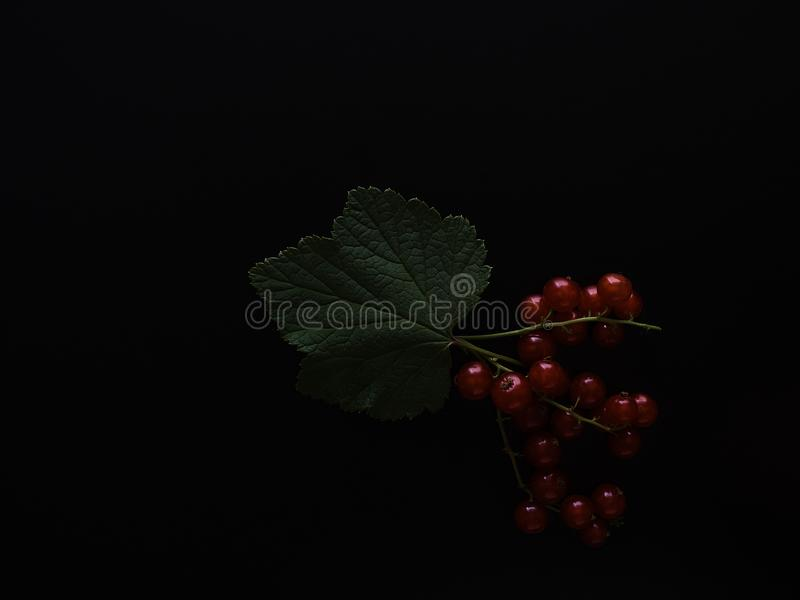 Bunch of currants royalty free stock photo