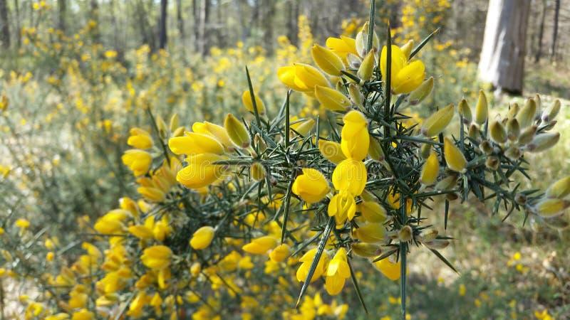 Like flowers stock image