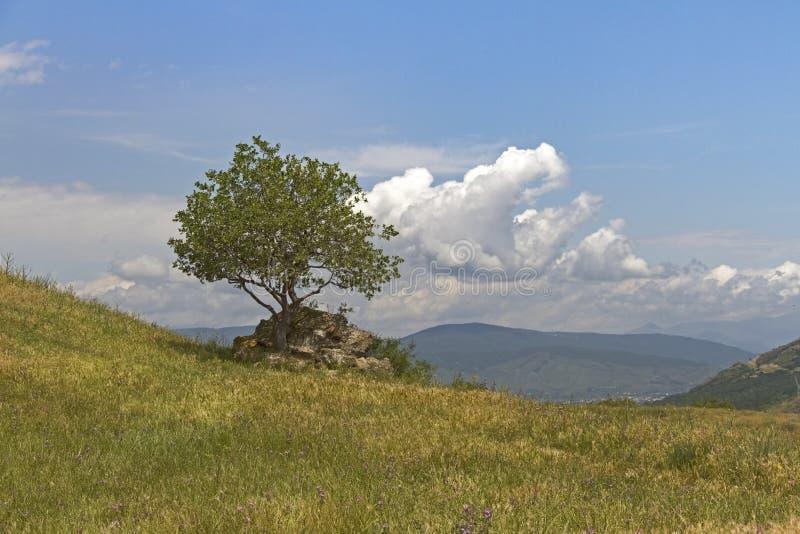 Like a Tree royalty free stock photo