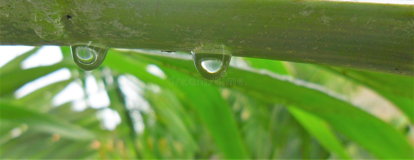 `Like two drops of water` royalty free stock photography