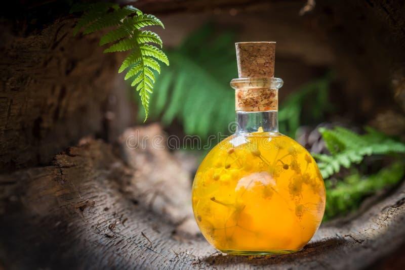 Likeur die van honing en linde wordt gemaakt stock foto's