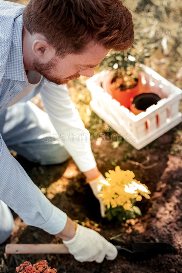 Serious stunning red-haired man liking gardening during weekend. Liking gardening. Serious stunning red-haired man liking gardening like planting colorful royalty free stock photos