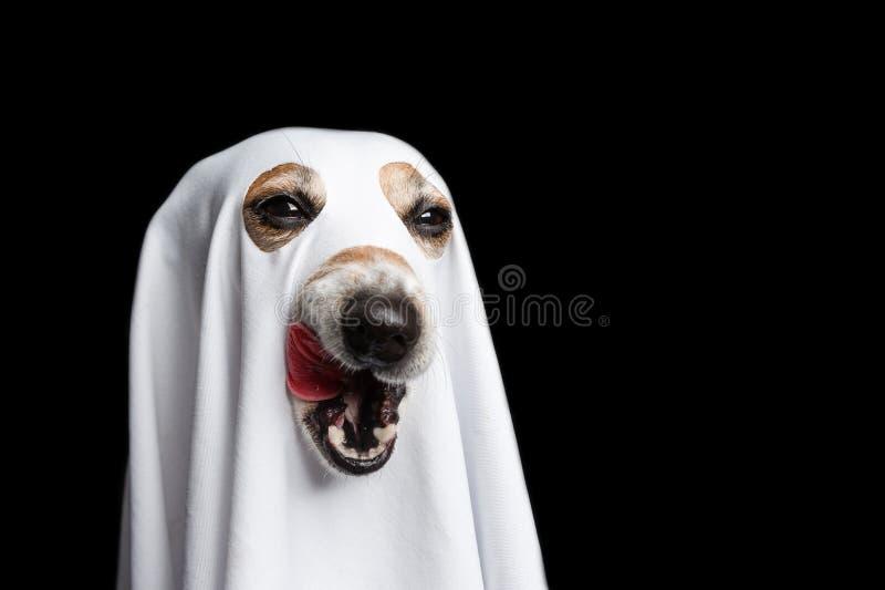 Likkend Halloween behandel of bedrieg grappig hondgezicht Zwarte achtergrond Wit spookkostuum stock afbeeldingen