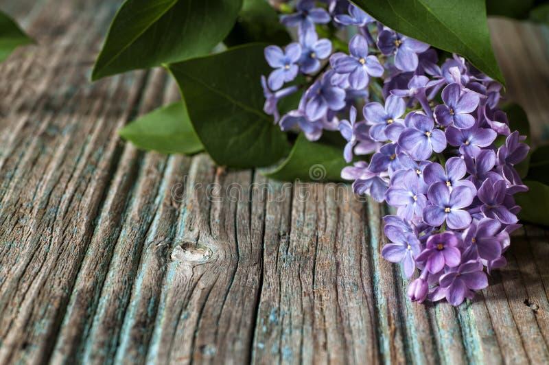 Lilás bonito imagens de stock