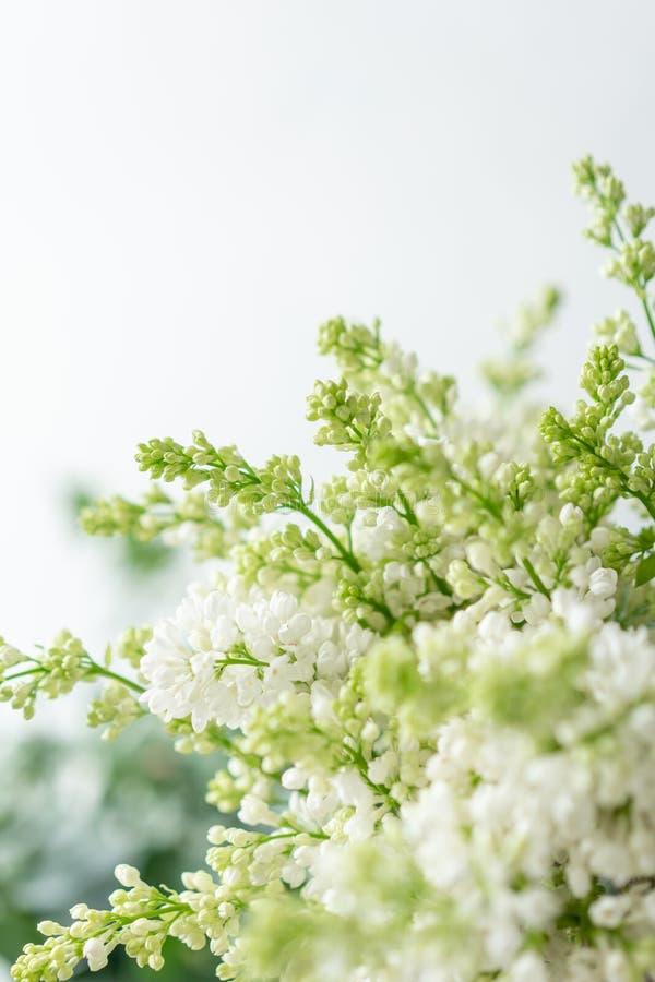 Lilás branco do grupo no vaso de vidro Flores do ramalhete no fundo claro wallpaper Árvores de florescência da mola fotos de stock
