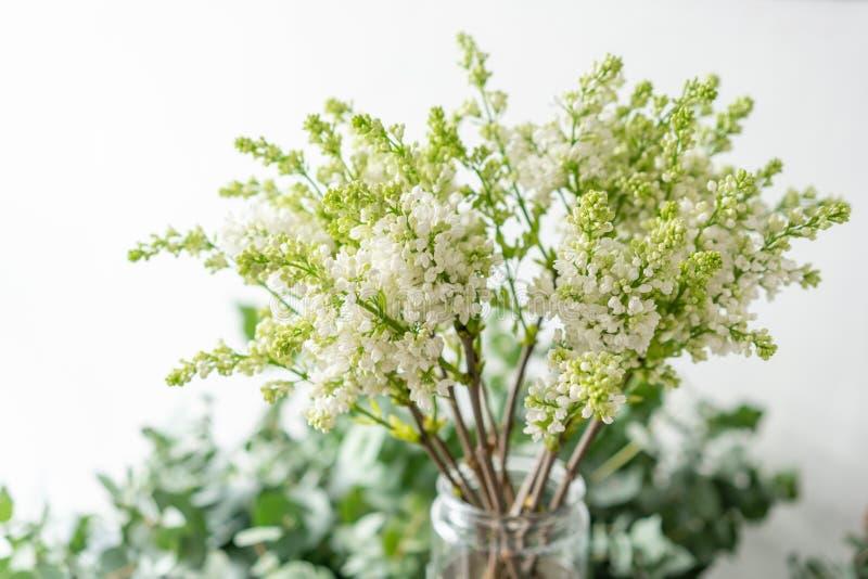 Lilás branco do grupo no vaso de vidro Flores do ramalhete no fundo claro wallpaper Árvores de florescência da mola fotografia de stock royalty free