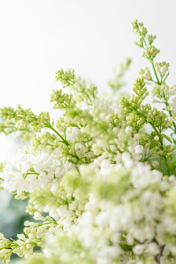 Lilás branco do grupo no vaso de vidro Flores do ramalhete no fundo claro wallpaper Árvores de florescência da mola fotos de stock royalty free