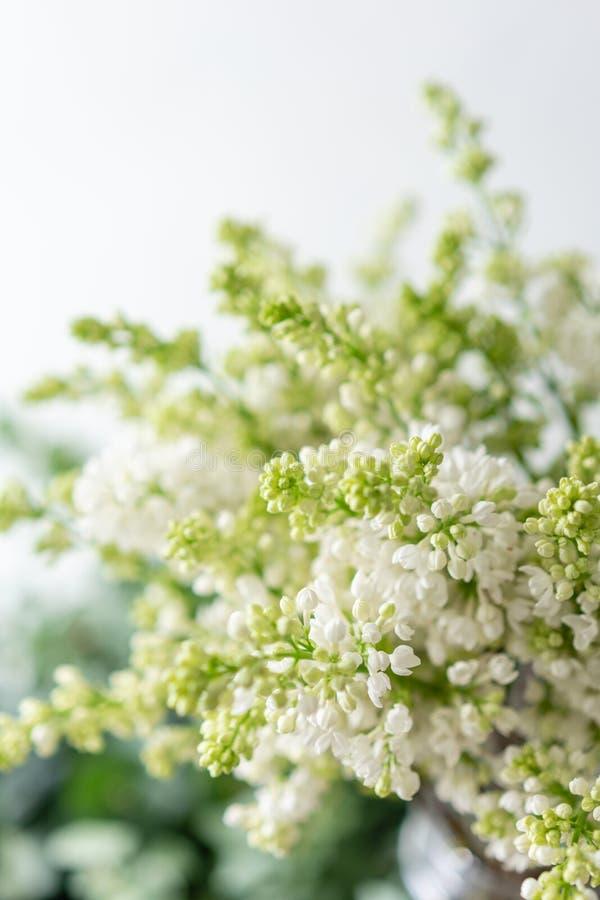 Lilás branco do grupo no vaso de vidro Flores do ramalhete no fundo claro wallpaper Árvores de florescência da mola imagem de stock royalty free