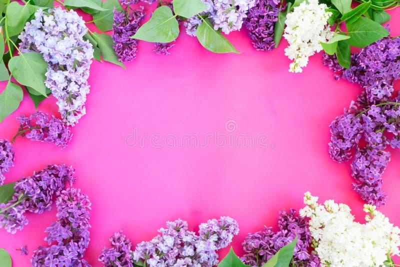 Lilás no fundo cor-de-rosa fotografia de stock