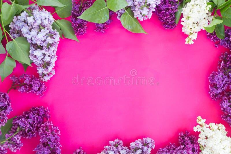 Lilás no fundo cor-de-rosa foto de stock royalty free