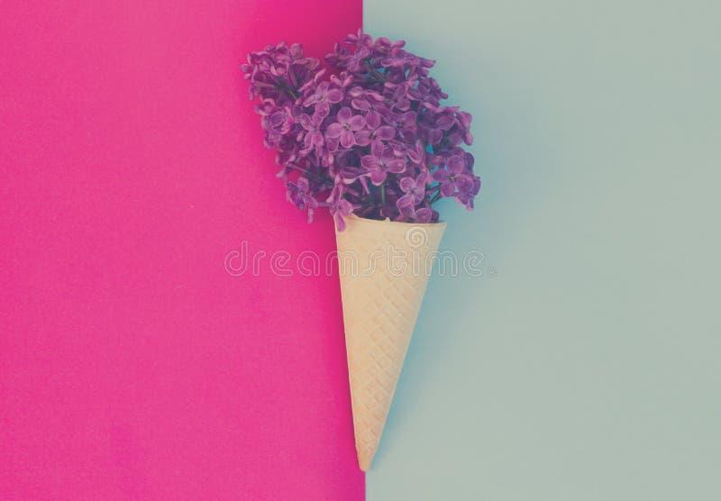 Lilás no fundo cor-de-rosa imagens de stock