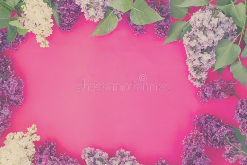 Lilás no fundo cor-de-rosa fotografia de stock royalty free