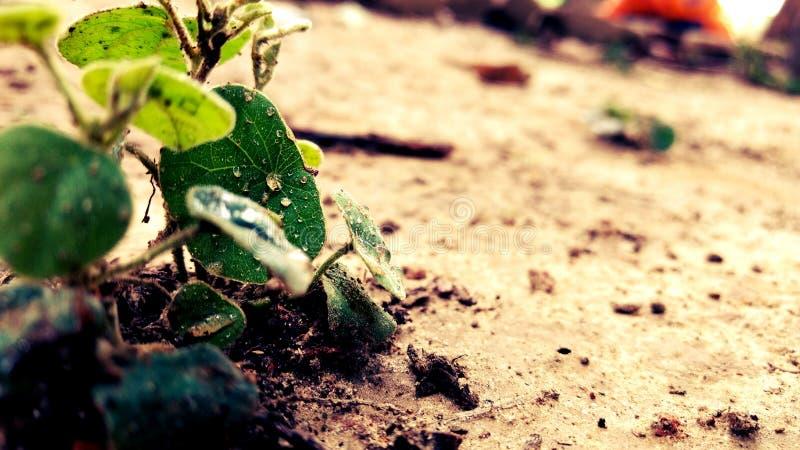 Lil植物 免版税库存图片