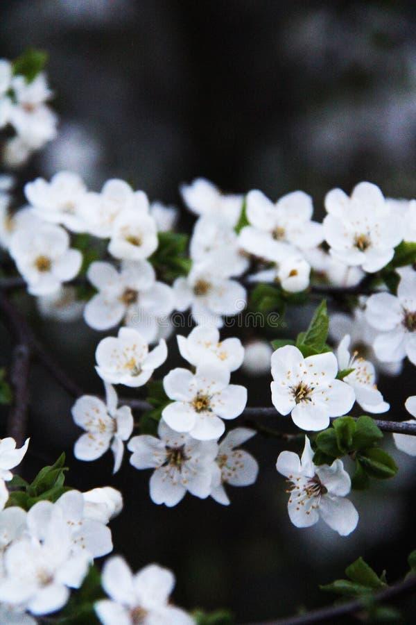 Lil?s bonito da mola da flor do sol da planta da foto do ver?o fotografia de stock royalty free
