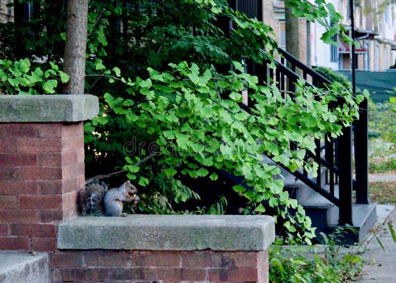 Lil Squirrel som mumsar på en lilshnack royaltyfri foto