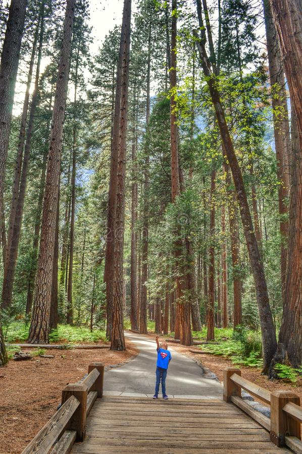 Lil Superman in Redwoods royalty free stock image