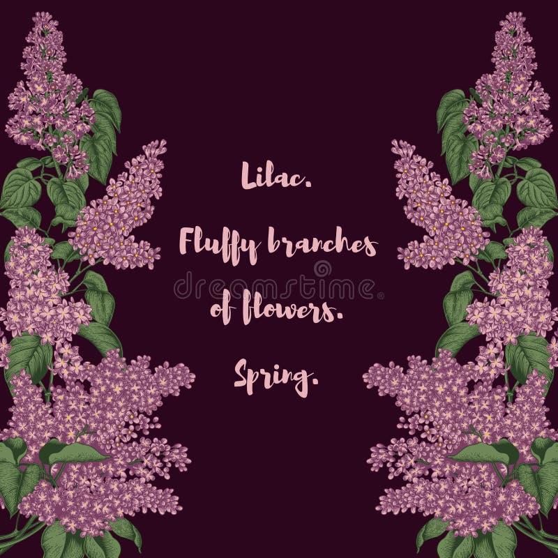 Lila Arbusto floreciente Ejemplo en estilo del vintage Apenas llovido encendido libre illustration