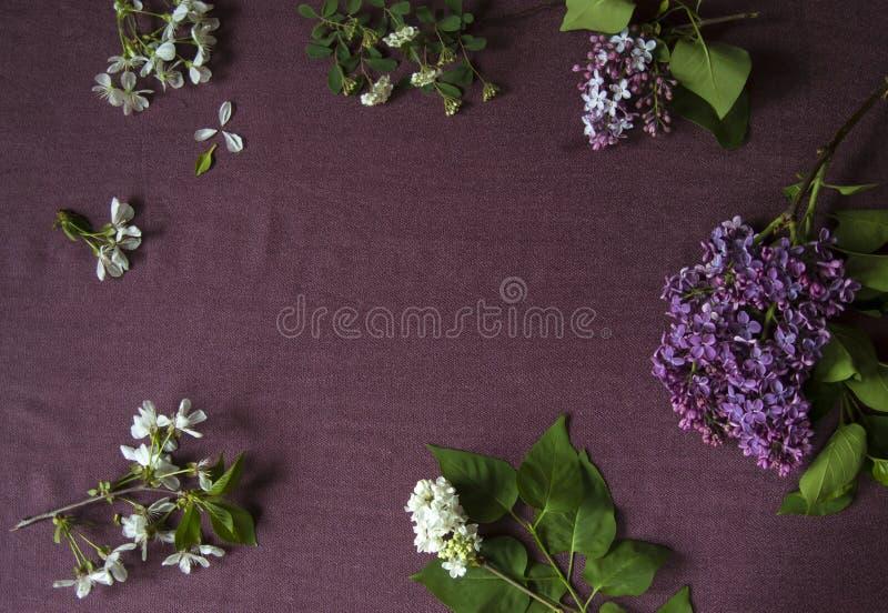 Lila Blüte auf purpurrotem Stoff mit leerem Raum für Grußmitteilung Beschneidungspfad eingeschlossen lizenzfreies stockfoto