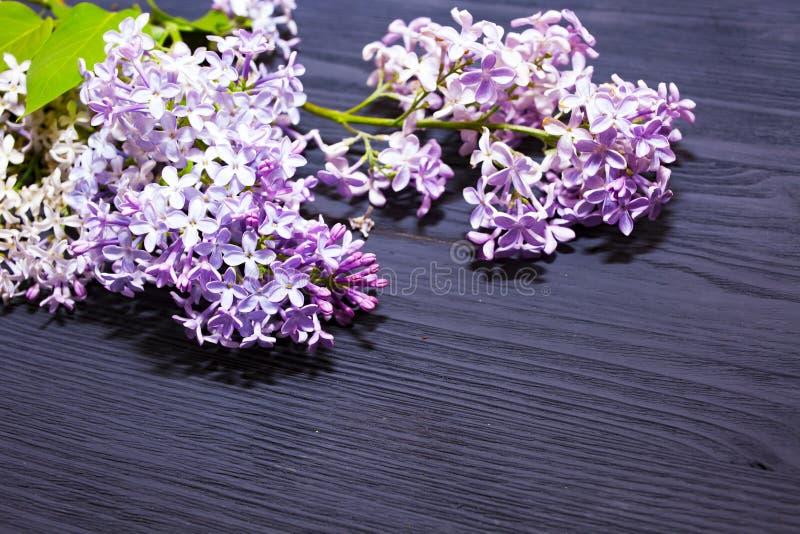 Lila blomma på svart träbakgrund Härlig bakgrund av filialer av att blomma lilan f?r prydnadpapper f?r bakgrund geometrisk gammal arkivfoton