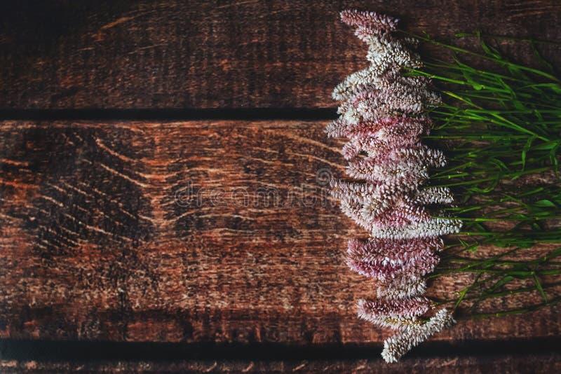 Lila blommor på mörk träbakgrund, Flatley royaltyfria foton