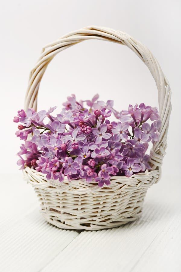 Lila Blume stockfotografie