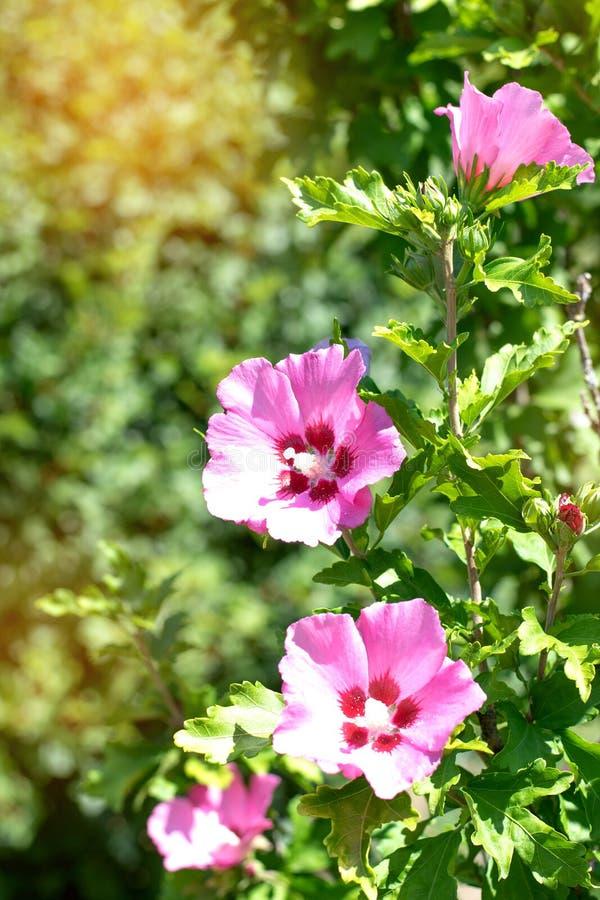 Violetter Lila Blumenhintergrund Stockfoto - Bild von ...