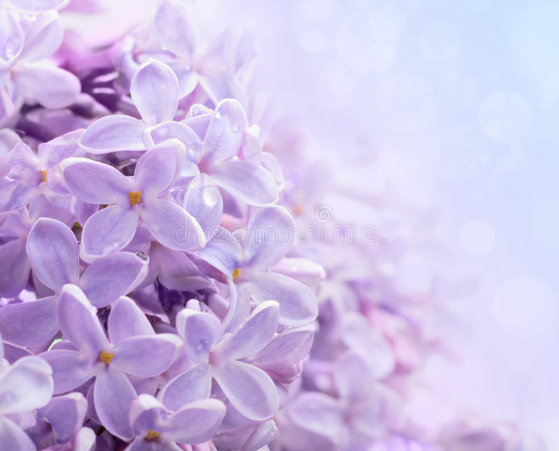Lila Blumen. Abstrakter Hintergrund. stockbilder