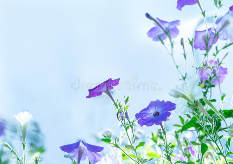 Lila Blumen auf dem Gebiet stockbild