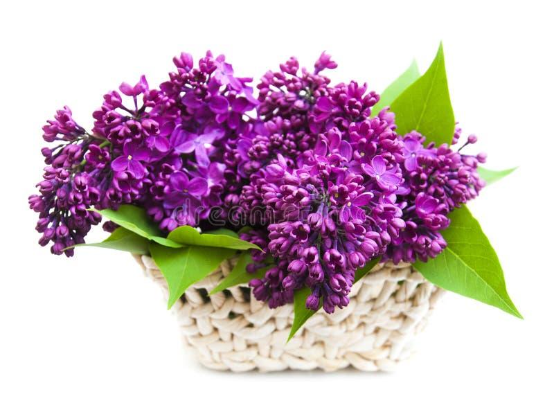 Lila Blumen des Sommers im Korb lizenzfreie stockfotografie