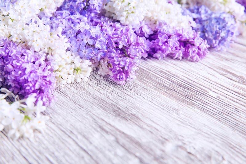 Lila Blumen-hölzerner Hintergrund, Blüten-rosa Farbblumen stockbilder