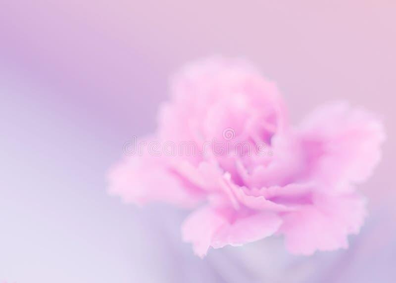Lila de la dulzura - macro rosada del clavel, suave imagen de archivo