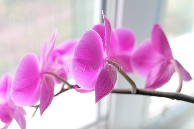 Lila de la orquídea imágenes de archivo libres de regalías
