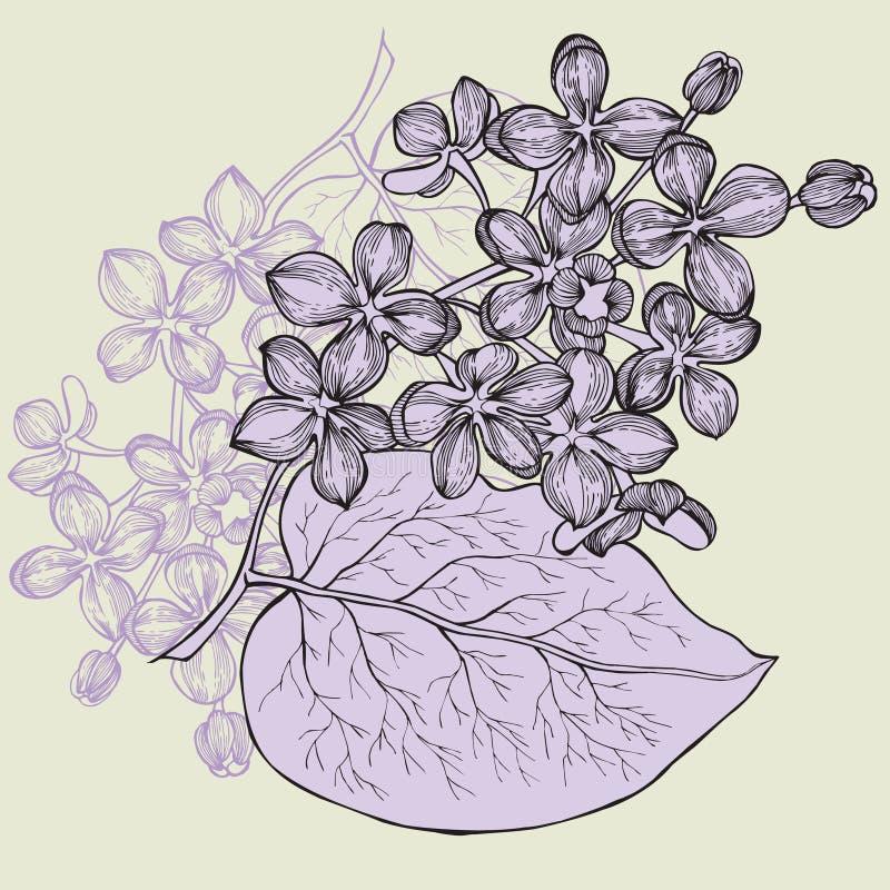 Lila filial, hand-teckning också vektor för coreldrawillustration vektor illustrationer