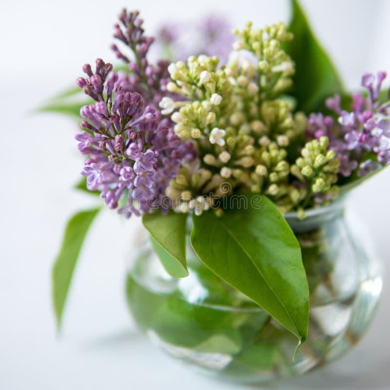 Lila floreciente en un pequeño florero foto de archivo libre de regalías