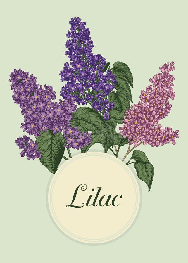 Lila Flores de la primavera de la lila Arbusto floreciente Ejemplo en estilo del vintage libre illustration