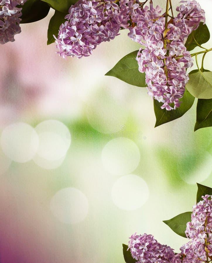 Lila Frühlingsblumen-Randauslegung stockbild