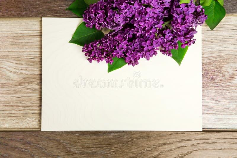 lila härliga blommor royaltyfria bilder