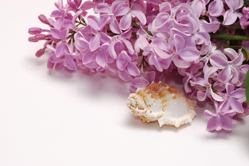 Lila kwiat wiązka, seashell odizolowywający na białym tle i fotografia stock