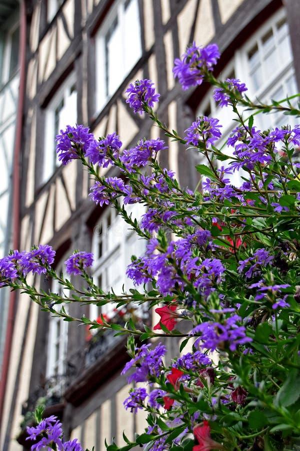 Lila och röda blommor i bakgrunden av halvtitrerade hus Rouen, Frankrike royaltyfri foto