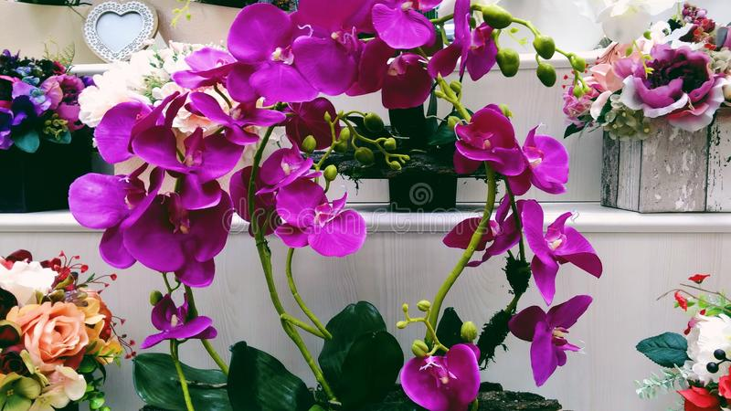 lila orchid arkivfoton